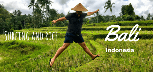 bali surfing and rice fields
