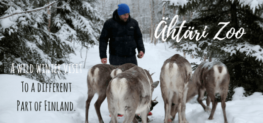 Ähtäri Zoo - A wild winter visit to a different part of Finland