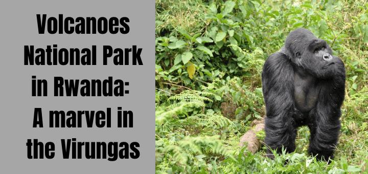 Volcanoes National Park in Rwanda A marvel in the Virungas